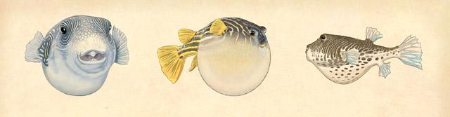 3 FISH ART